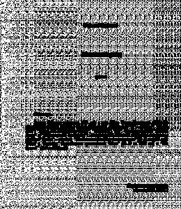 Шалинский рейд