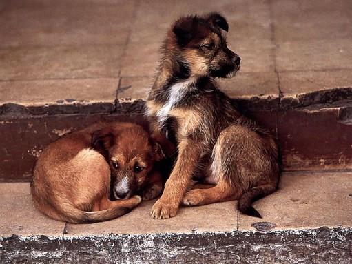 В ЧР усилят работу по отлову бездомных животных