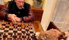 Изолировавшийся Шварценеггер поиграл в шахматы с ослом