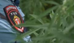 В с. Бено-Юрт уничтожили свыше 16 000 кустов наркосодержащих растений
