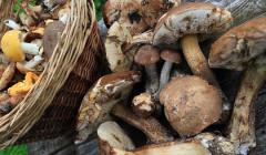 Названа опасность грибов для некоторых людей