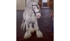 Элитная конюшня Кадырова пополнилась одним из самых титулованных жеребцов