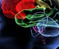 10 самых распространенных заблуждений о мозге