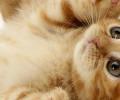 Кошки: Язык звуков
