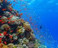 Кислотность воды в Мировом океане постепенно повышается. Как это влияет на животных?