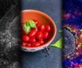 Показано, как уменьшение калорийности рациона замедляет старение клеток