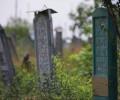"""""""Душа тоскует"""". Чеченские мигранты завещают похоронить их на родине"""