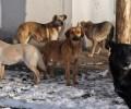 В Грозном проводят проверку по факту отлова бродячих животных