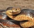 Поучительная история про змею